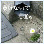 e0067429_711168.jpg