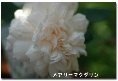 e0029943_197047.jpg