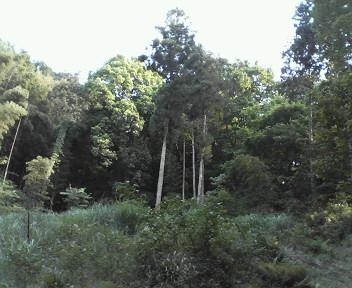 裏山は異次元…_b0093660_021132.jpg