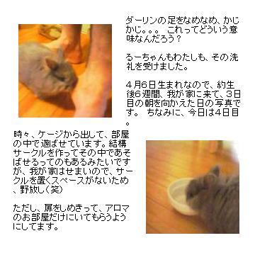 f0053374_722595.jpg