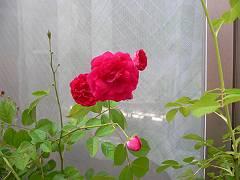 f0001378_19583258.jpg