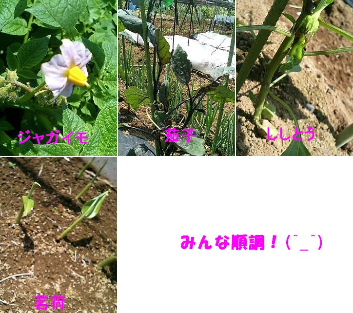 c0059781_14263861.jpg