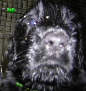 マッタリ犬候補生とテレビっコ_b0084194_16105050.jpg