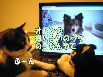 b0041182_21453657.jpg