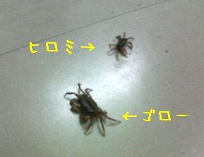 b0044804_16485574.jpg