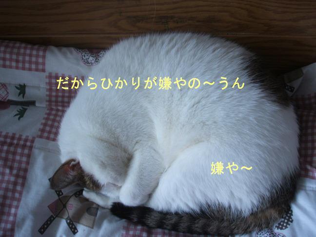 b0105327_199974.jpg