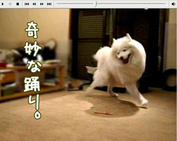 喜びレベル_c0062832_19142021.jpg