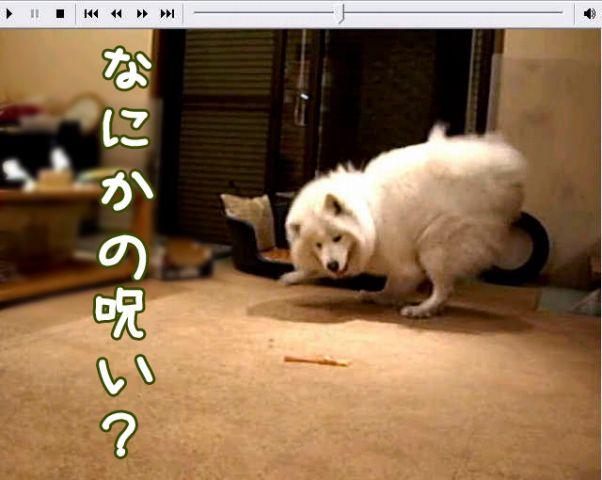 喜びレベル_c0062832_19154226.jpg
