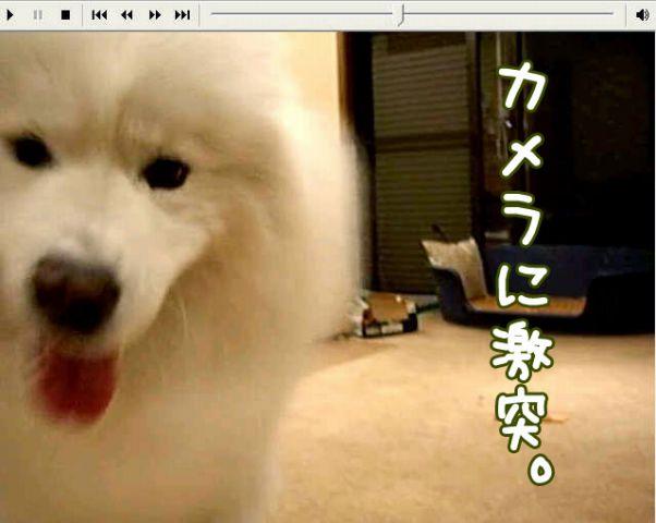 喜びレベル_c0062832_19213610.jpg
