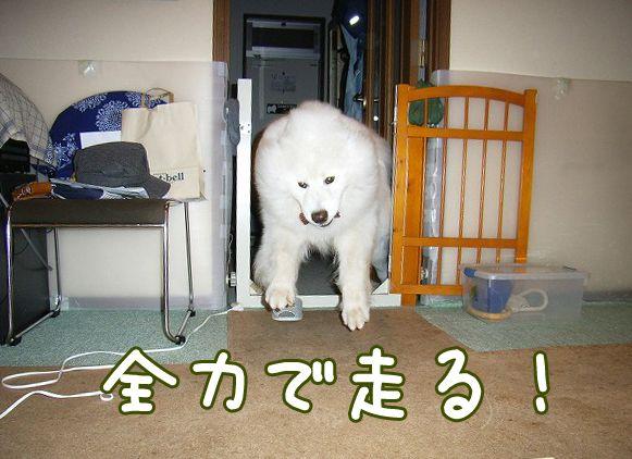 喜びレベル_c0062832_19234124.jpg