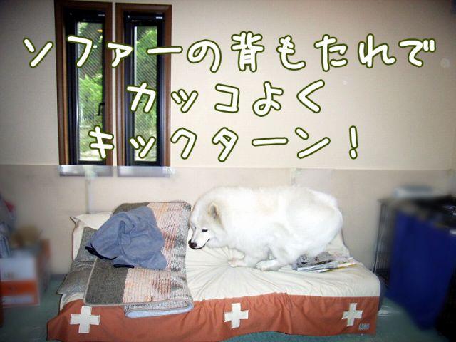喜びレベル_c0062832_19235887.jpg