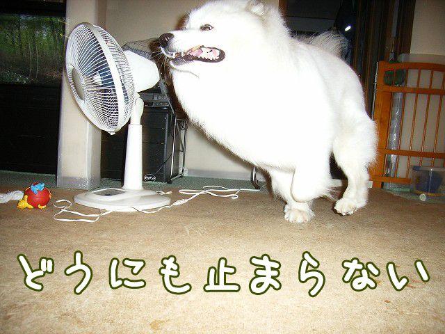 喜びレベル_c0062832_19241425.jpg