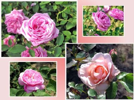 花の女王_f0045132_12133844.jpg