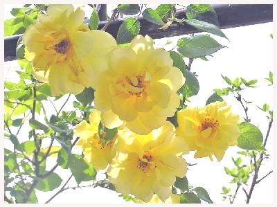 花の女王_f0045132_1214944.jpg