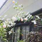 美容室HANAMOMENの ☆お庭☆_a0059281_14525676.jpg