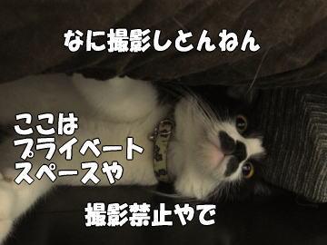 b0041182_205599.jpg