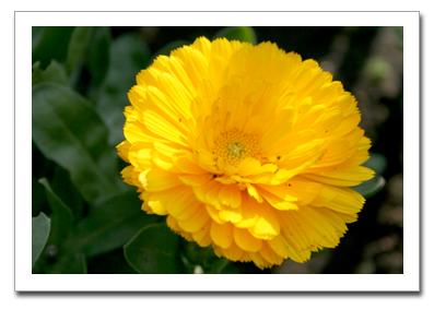 花を撮る!_f0100215_10591133.jpg