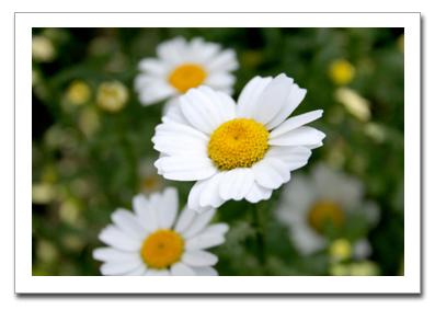 花を撮る!_f0100215_1111989.jpg