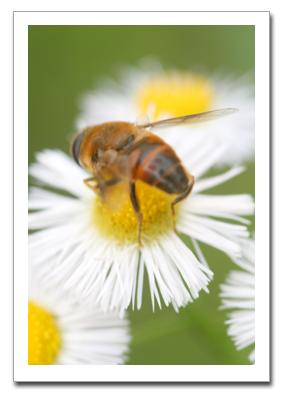 花を撮る!_f0100215_1113862.jpg
