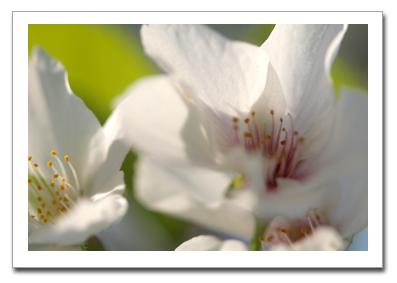 花を撮る!_f0100215_1115962.jpg
