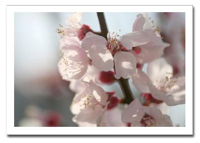 花を撮る!_f0100215_1123422.jpg