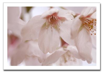 花を撮る!_f0100215_116622.jpg