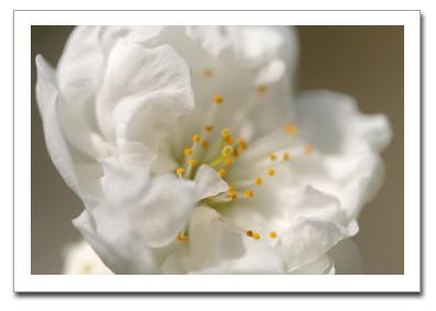 花を撮る!_f0100215_1183175.jpg