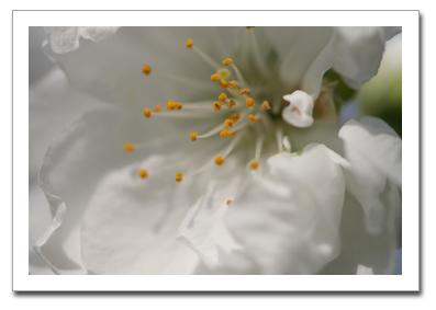 花を撮る!_f0100215_11842100.jpg