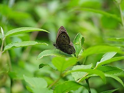 蝶を撮る_b0025738_2233374.jpg