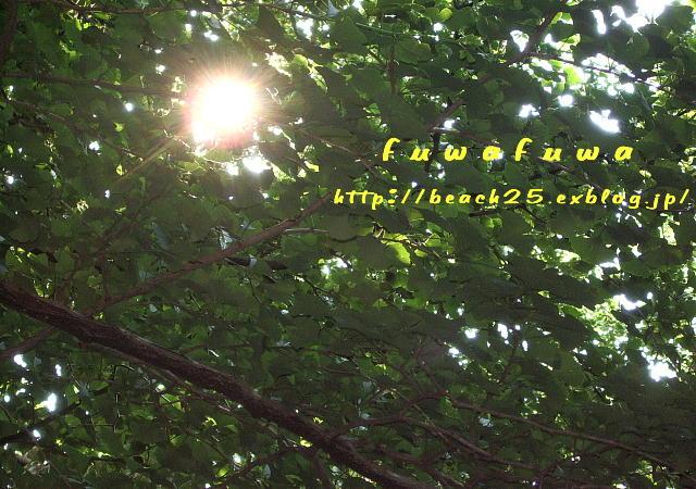 b0088039_2040659.jpg