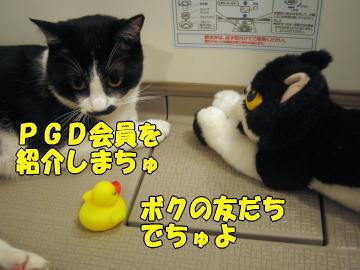 b0041182_20221912.jpg