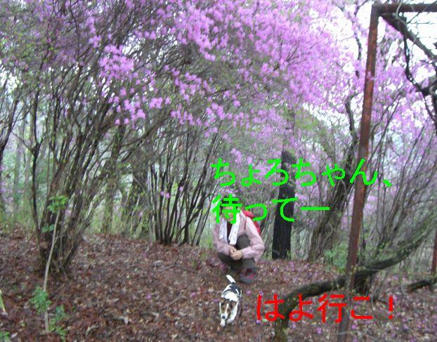 f0053952_12394534.jpg