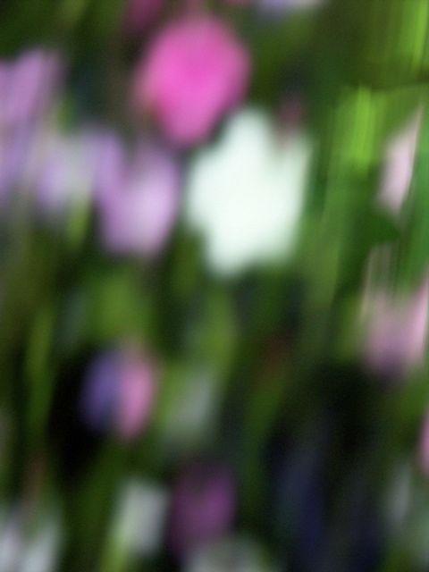 今年はまさに……沈黙の春。_e0044929_834443.jpg