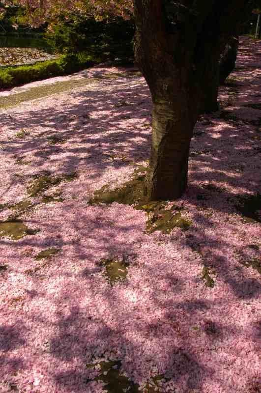札幌遠征その7 春と初夏が一緒に_f0050534_8542912.jpg