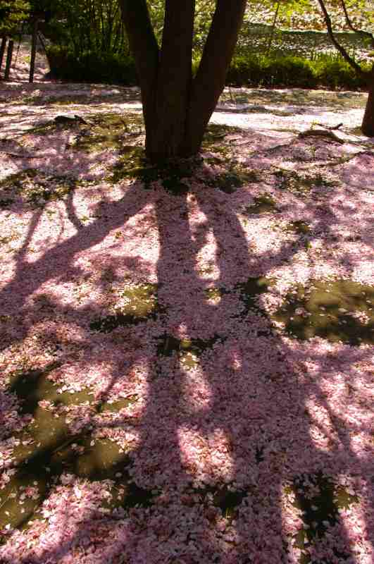 札幌遠征その7 春と初夏が一緒に_f0050534_8544452.jpg