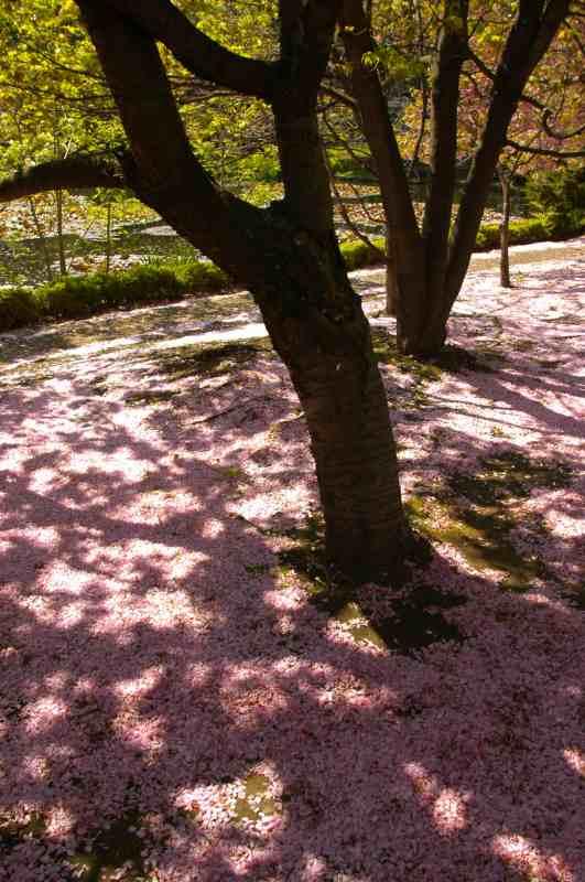 札幌遠征その7 春と初夏が一緒に_f0050534_8545914.jpg