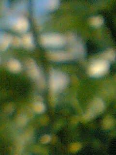 f0100480_17224776.jpg