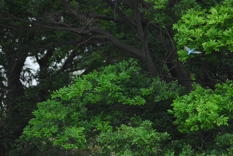 初夏です三題_b0024798_646743.jpg