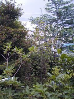 庭の樹木と花~その3_b0089338_19313957.jpg