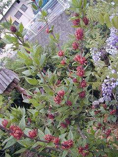 庭の樹木と花~その3_b0089338_19322427.jpg
