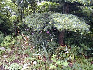 庭の樹木と花~その3_b0089338_19332639.jpg