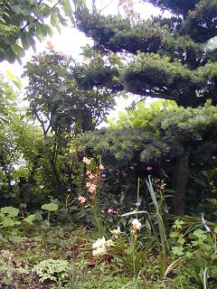 庭の樹木と花~その3_b0089338_19334732.jpg