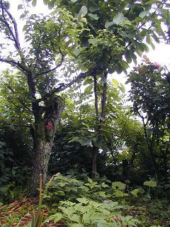 庭の樹木と花~その3_b0089338_1934365.jpg