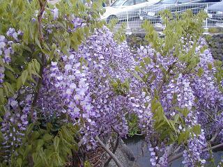 庭の樹木と花~その3_b0089338_19345597.jpg