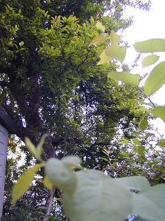 庭の樹木と花~その3_b0089338_195008.jpg