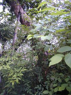 庭の樹木と花~その3_b0089338_19501379.jpg