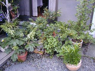 庭の樹木と花~その4_b0089338_23504770.jpg