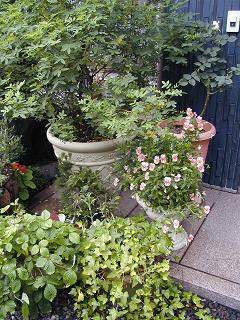 庭の樹木と花~その4_b0089338_23505757.jpg
