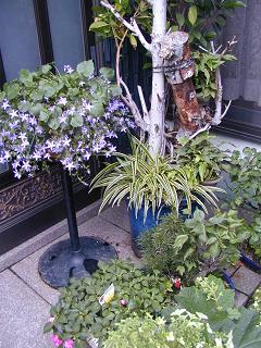 庭の樹木と花~その4_b0089338_23513592.jpg