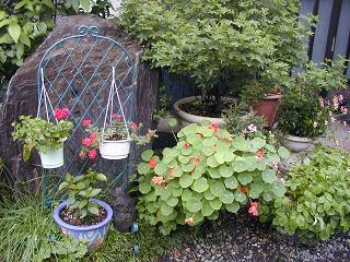 庭の樹木と花~その4_b0089338_2351964.jpg